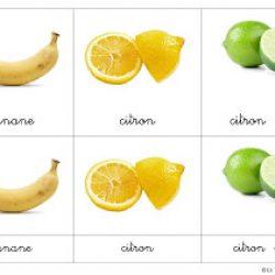 Lesfruits-1